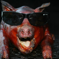 city smoke barbecue pig roasts 205616188x188