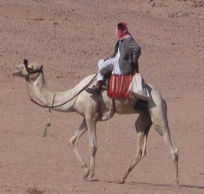 kool camel tool