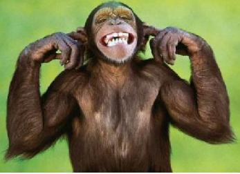 monkey finger in ears